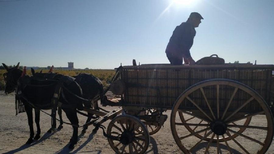 Fiesta de la Vendimia en La Mancha