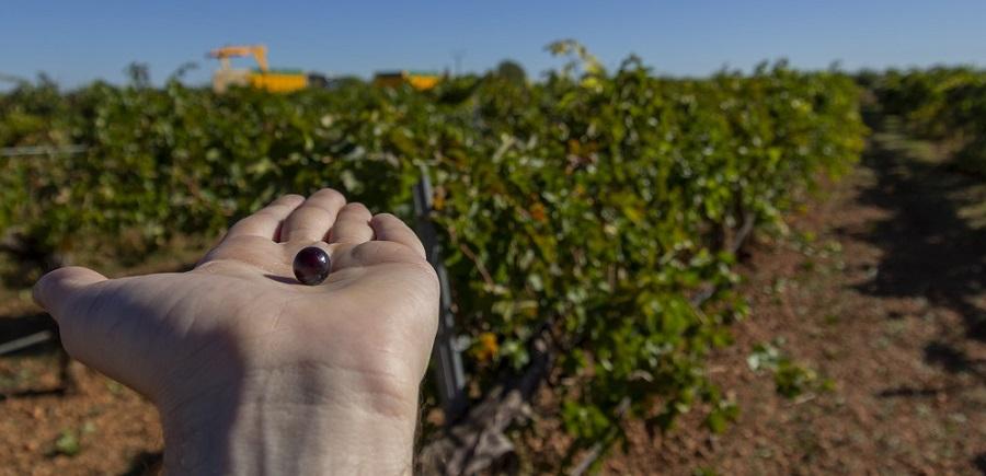 La Mancha, líder en cultivo ecológico en 2020