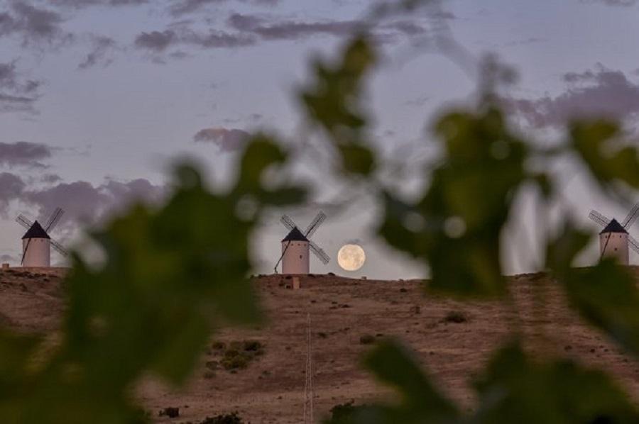 Vista a los molinos desde viñedos DO La Mancha