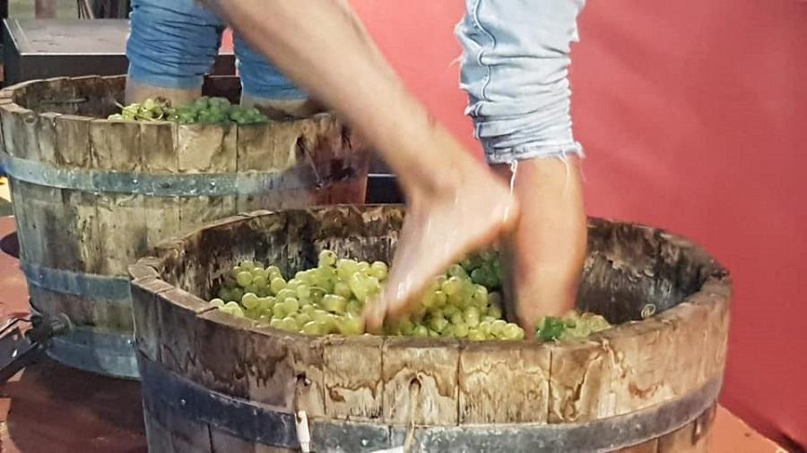 Pisa de la uva en Pedro Muñoz